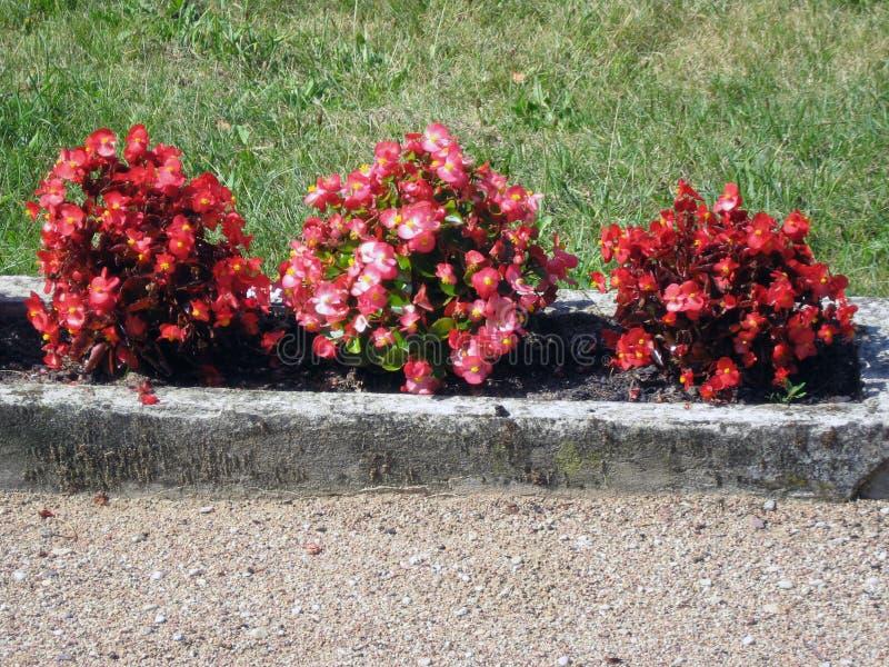 Cama de flor decorativa fotografia de stock