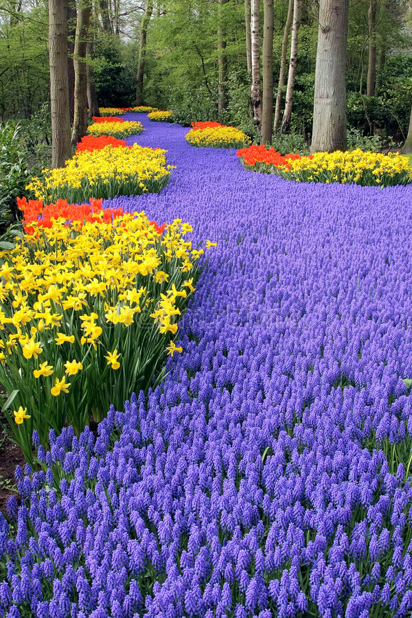 Cama de flor em jardins de Keukenhof foto de stock