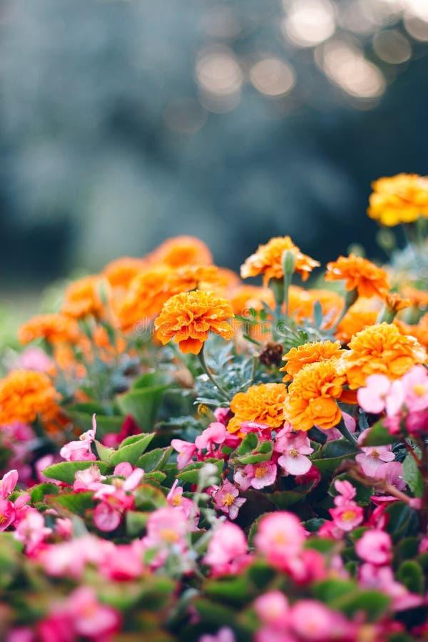 Cama de flor en el jardín con las flores decorativas foto de archivo