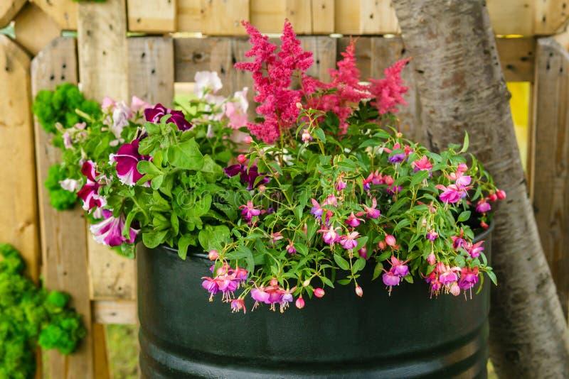 Cama de flor en un barril del hierro imagen de archivo libre de regalías