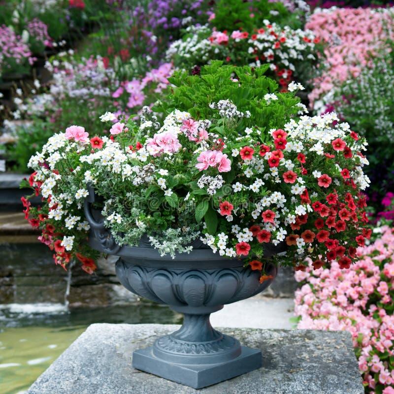 Cama de flor luxuosa fotos de stock royalty free
