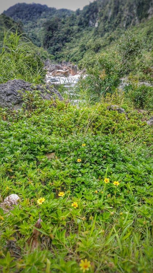 Cama de flor pelo rio fotos de stock