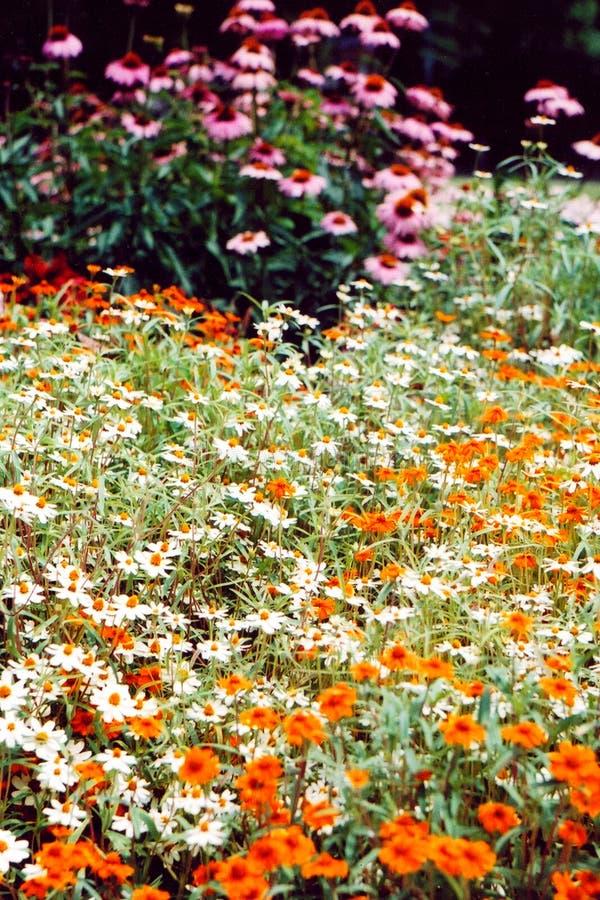 Cama de flores 2 fotos de stock royalty free