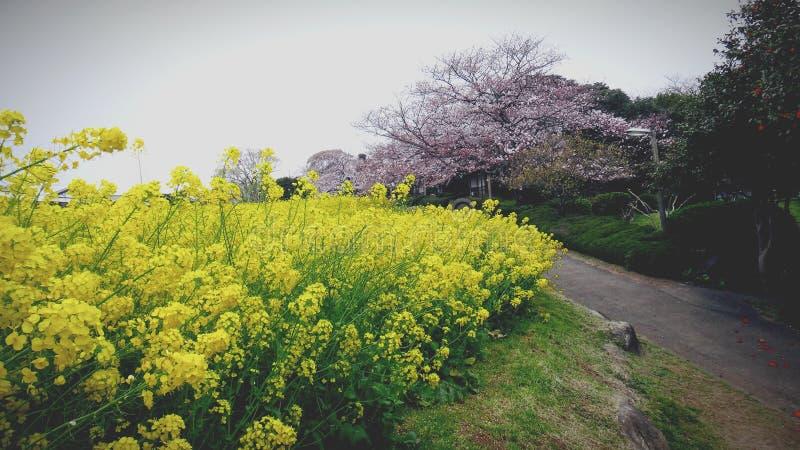 cama de flores amarela bonita fotografia de stock