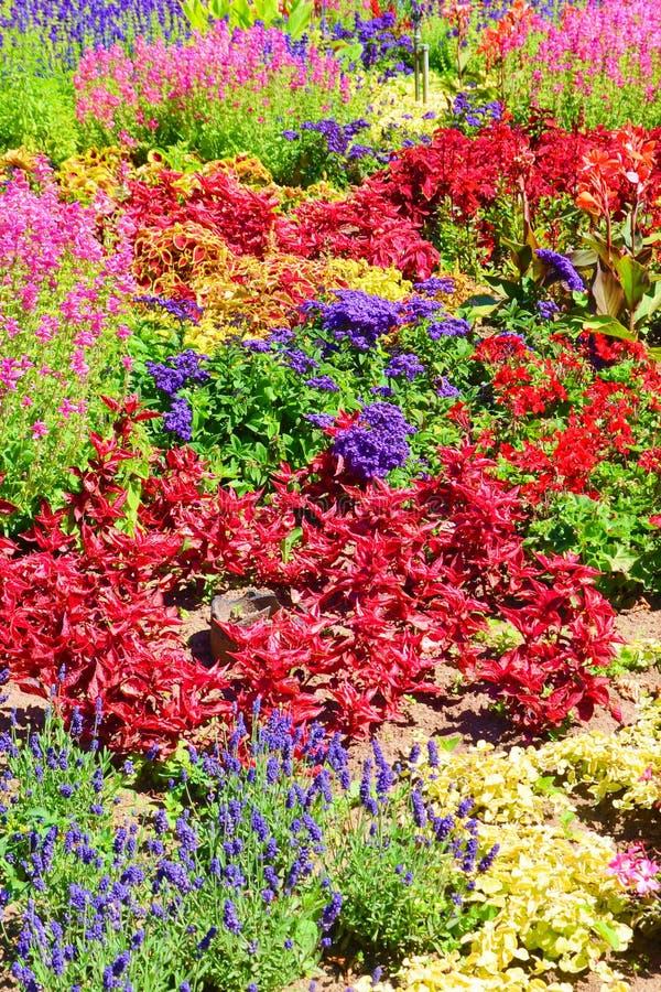 Cama de flores incrível com uma vária pálete de cores da flor de vermelho, do rosa, de violetas a amarelo ou a verde foto de stock