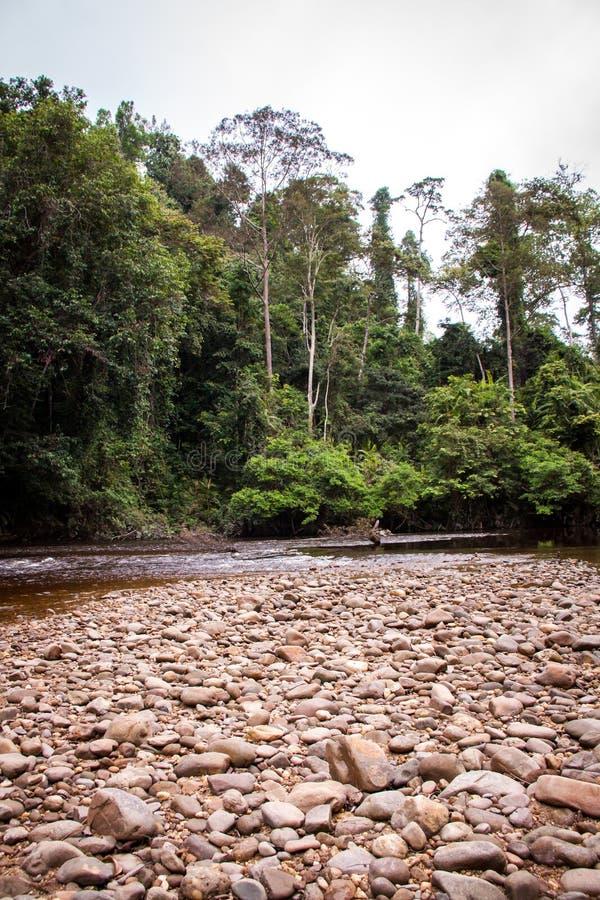 Download Cama De Río Pedregosa En Una Selva Verde Enorme Imagen de archivo - Imagen de soledad, canal: 41907859