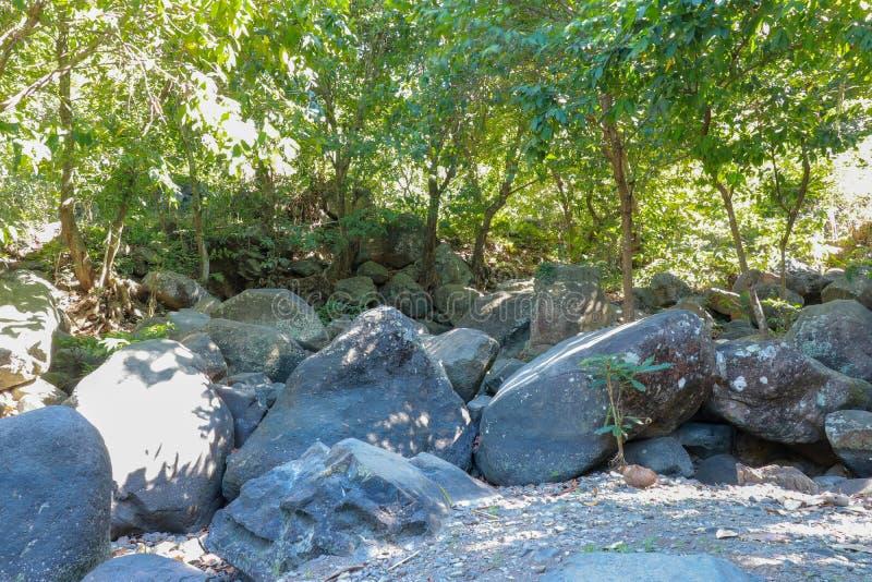 Cama de río seca con los cantos rodados enormes Vegetación enorme, bambú y selva tropical imágenes de archivo libres de regalías