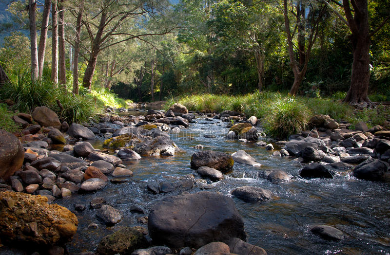 Cama de rio de Ozzy imagem de stock royalty free