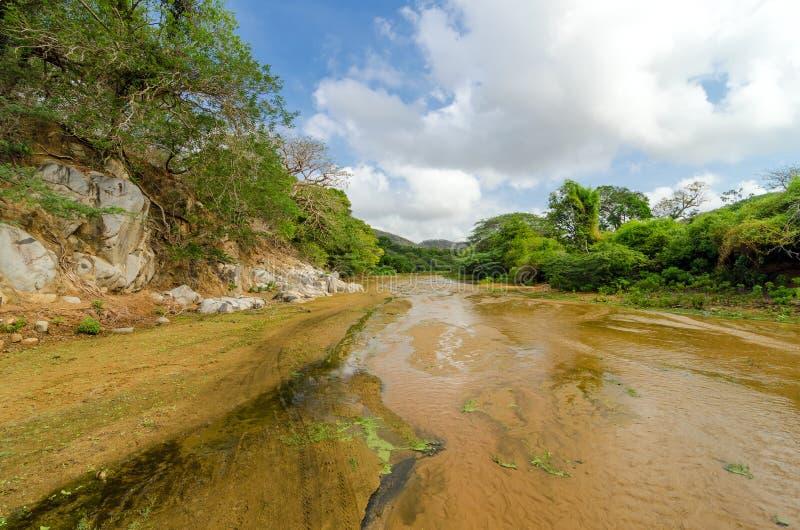 Cama de rio rasa fotos de stock