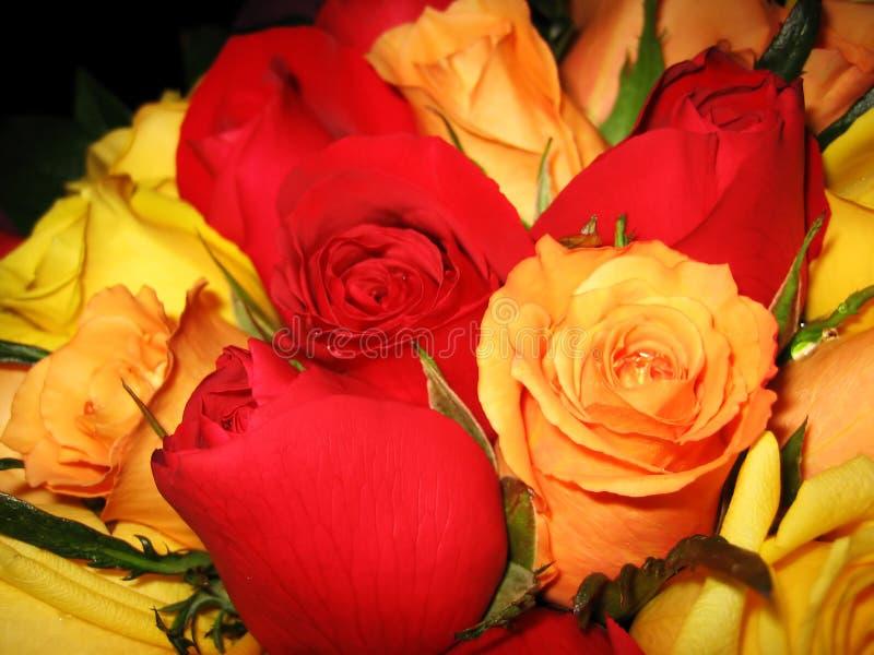 Cama de rosas fotos de stock