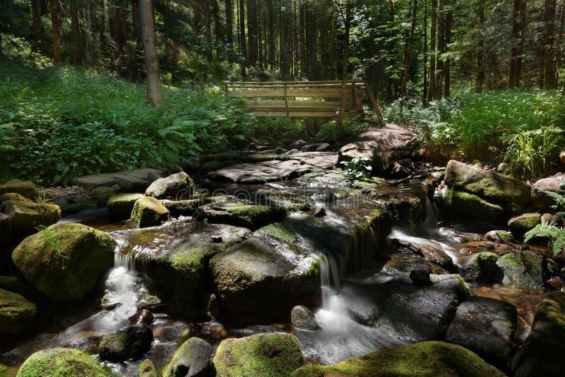 Cama de Stony Creek na floresta com uma ponte de madeira pequena foto de stock royalty free