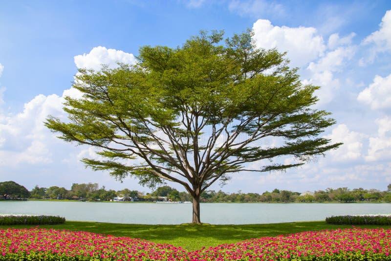 Cama del árbol y de flor con el fondo del cielo azul imagenes de archivo