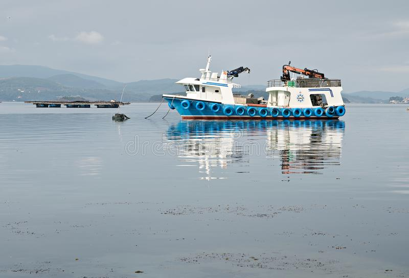 Cama del barco del mejillón y de mejillón en el mar Acuicultura del mejillón Paisaje marina fotografía de archivo