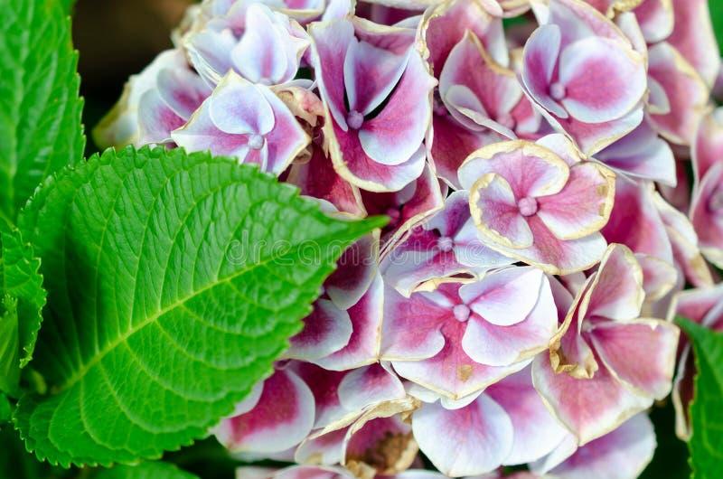 Cama del jard?n del rosa y blancas de flores fotos de archivo