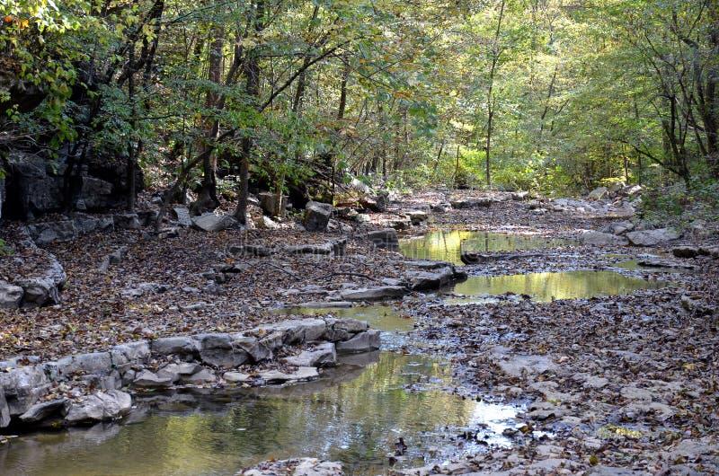 Cama do córrego que atrasa-se através de Forest Canopy fotografia de stock royalty free