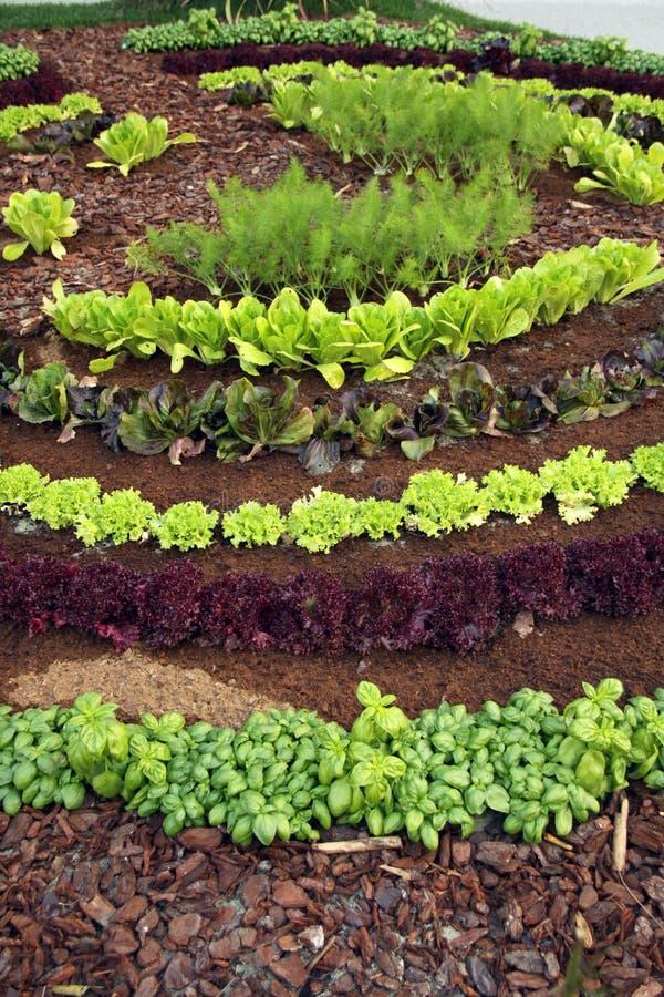 Cama do jardim fotografia de stock