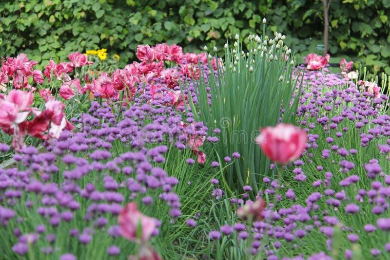 Cama do jardim com as flores diferentes das plantas fotografia de stock royalty free