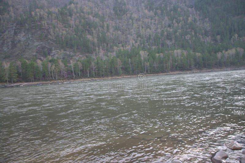 A cama do rio Katun da montanha, correndo através das cordilheiras cobertas com a floresta conífera, tiro no por do sol fotos de stock