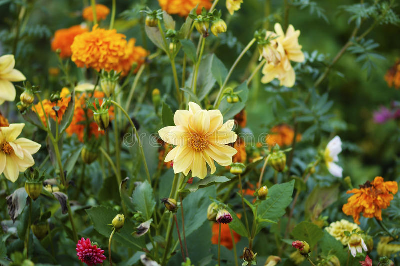 Cama floral fotografia de stock