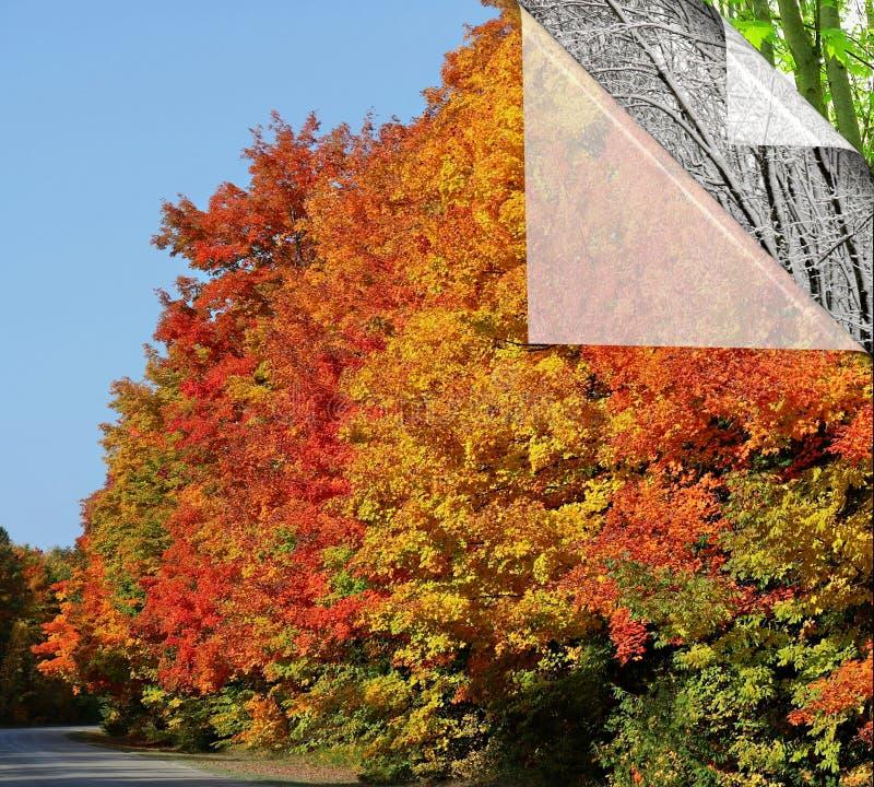 Camadas de estações da mostra da natureza e de ciclo de vida em mudança da árvore de bordo imagens de stock