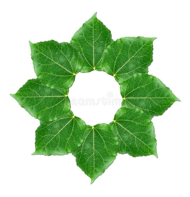 Camadas de folhas de amora verde sobre fundo branco fotos de stock