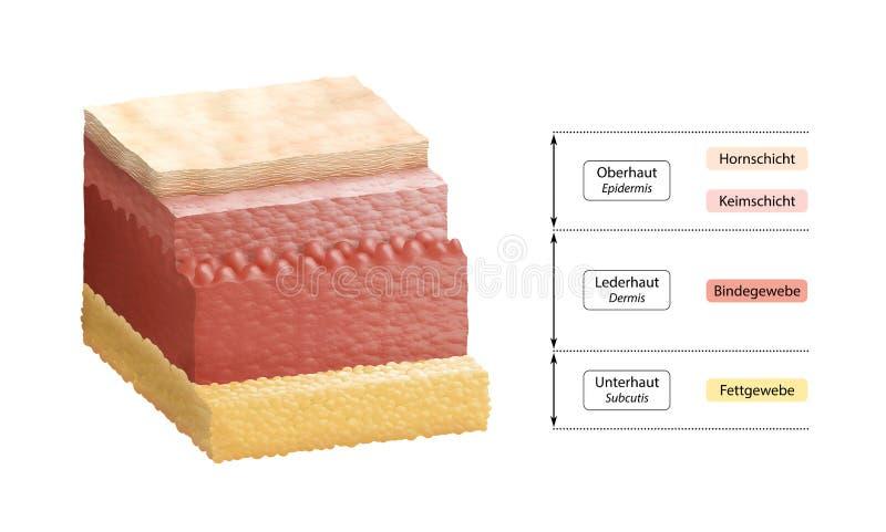 Camadas de pele humana - rotulagem alemão ilustração stock