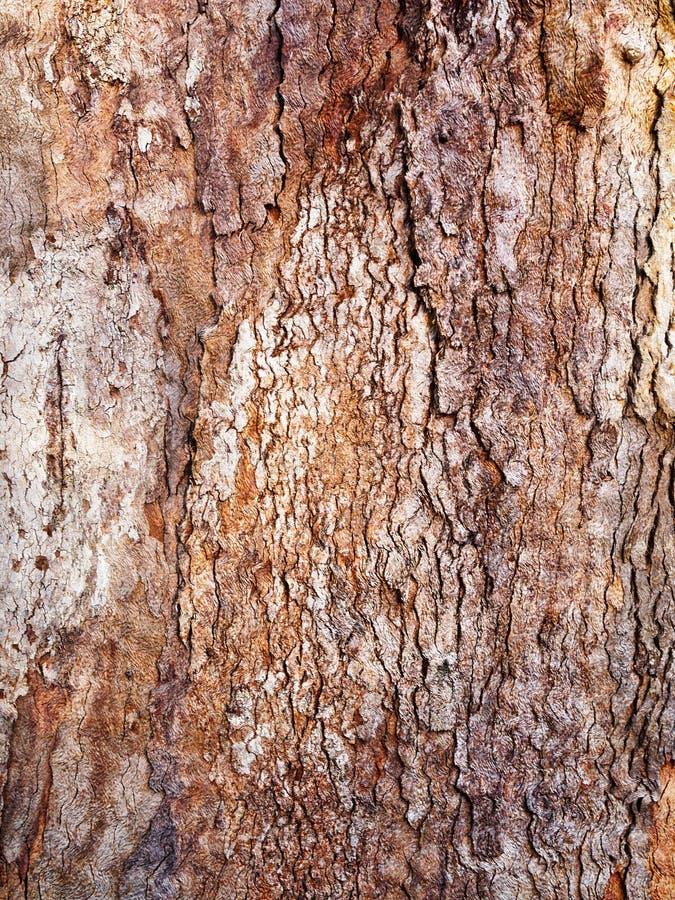 Camadas Textured grossas da casca na árvore velha, Sydney, Austrália fotografia de stock royalty free