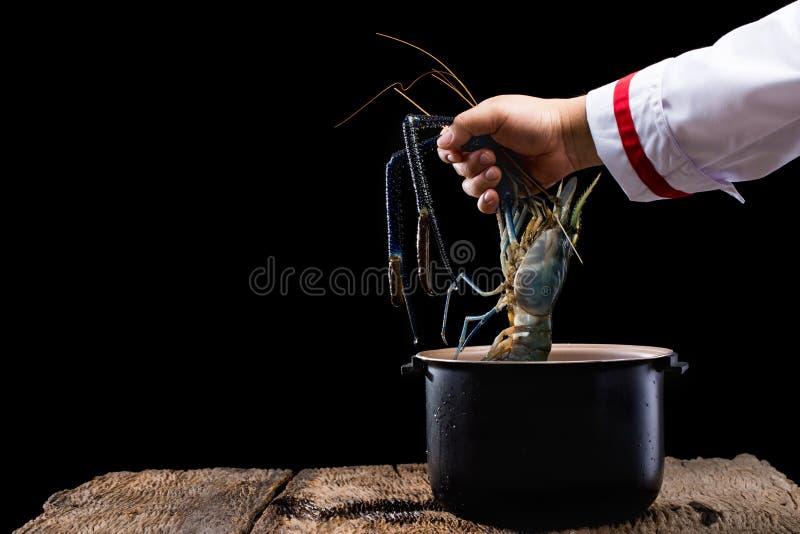 Camarão com cozinheiro chefe da mão foto de stock royalty free