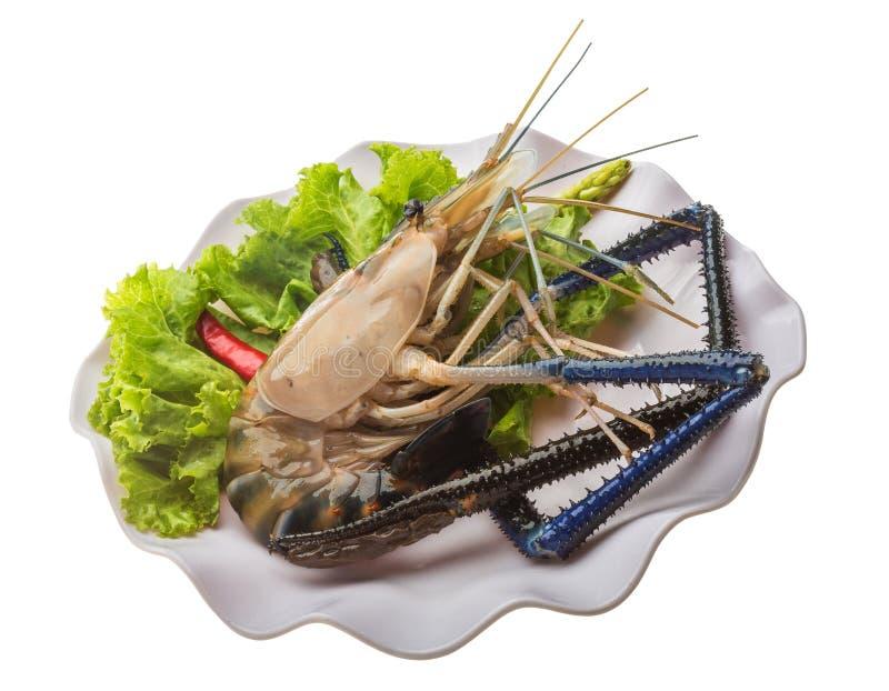 Camarão de água doce foto de stock