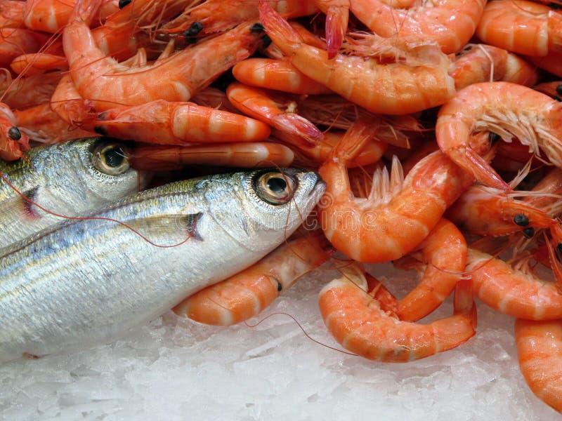 Camarão e peixes fotografia de stock