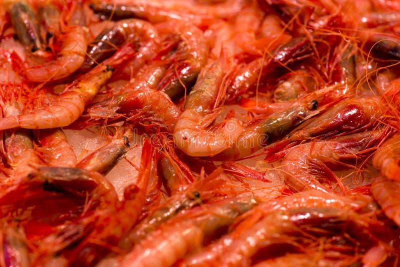 Camarão fresco fotos de stock