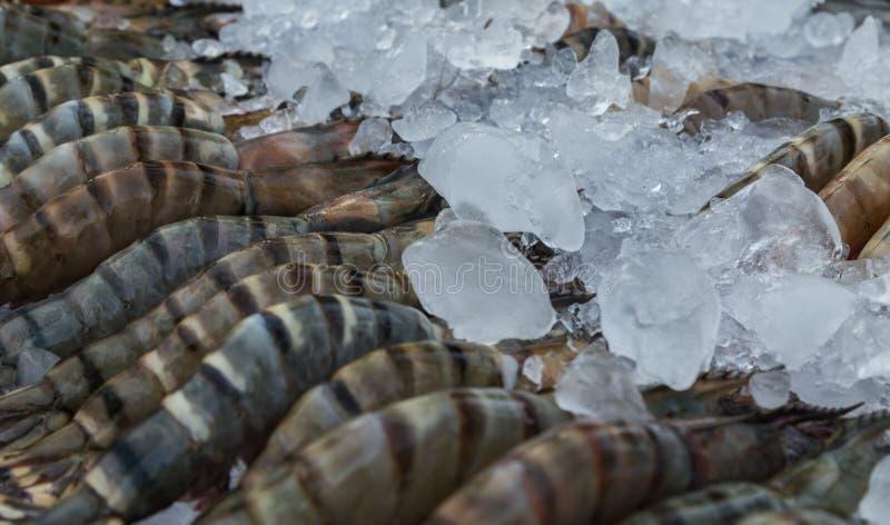 Camarão preto cru do tigre no fundo do gelo foto de stock royalty free