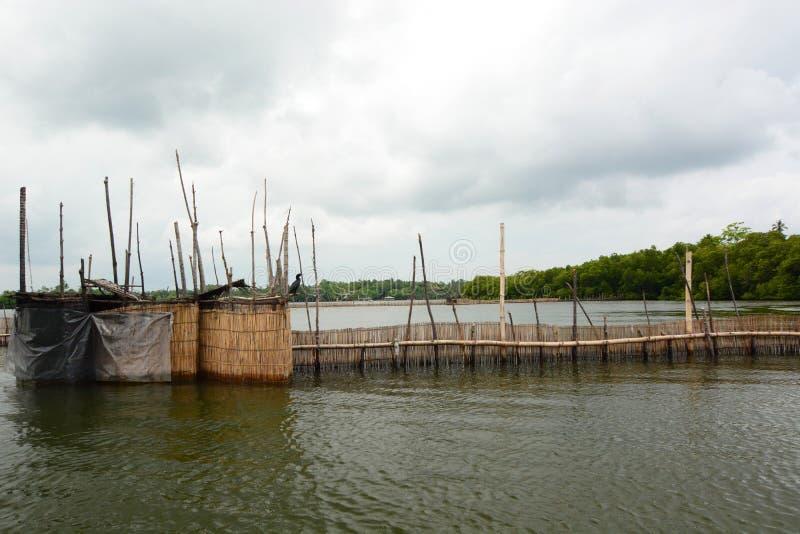 Camarão que cultiva a barreira Pantanais do ganga de Madu Balapitiya Sri Lanka imagens de stock royalty free