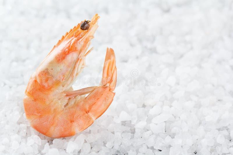 Camarón en un placer de la sal del mar Un camarón crudo en un fondo blanco Macro imagenes de archivo
