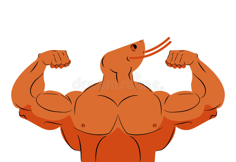 Camarón fuerte del atleta Atleta del animal marino de la aptitud con m enorme stock de ilustración