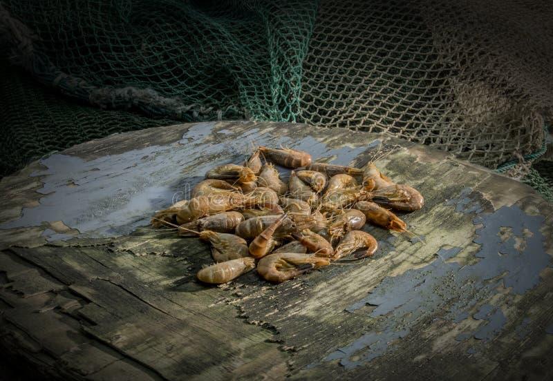 Camarões do Mar do Norte fotografia de stock
