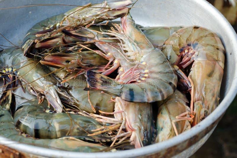 Camarões frescos na bacia Mercado dos peixes e do marisco em Sri Lanka foto de stock