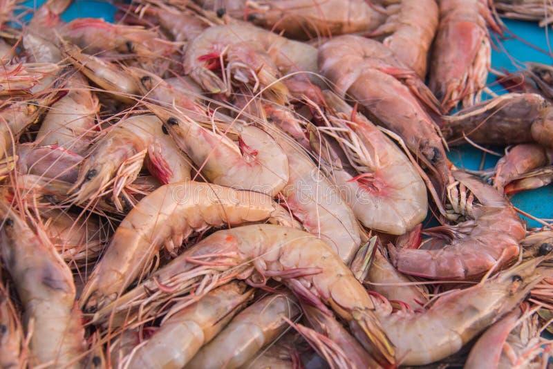 Camarões frescos que estão sendo vendidos no mercado local ou no mercado de peixes foto de stock royalty free