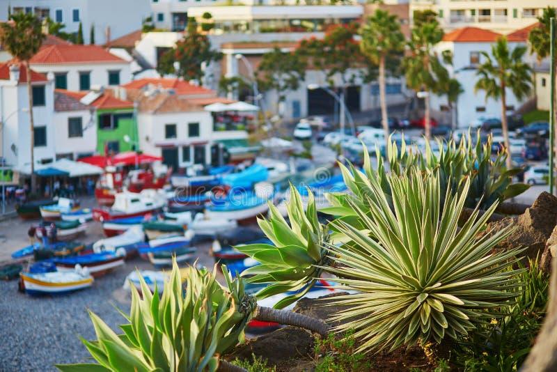 Camara De Lobos wioska rybacka z drzewkiem palmowym w przedpolu Madery wyspa, Portugalia obraz royalty free