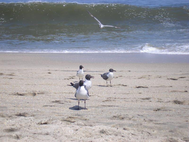 Camaradas da praia fotografia de stock royalty free