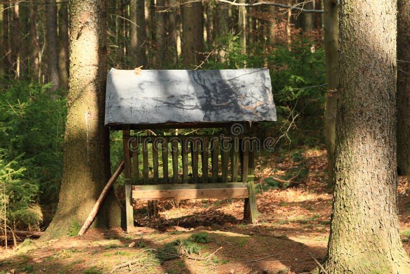 Camarade dans la forêt image libre de droits