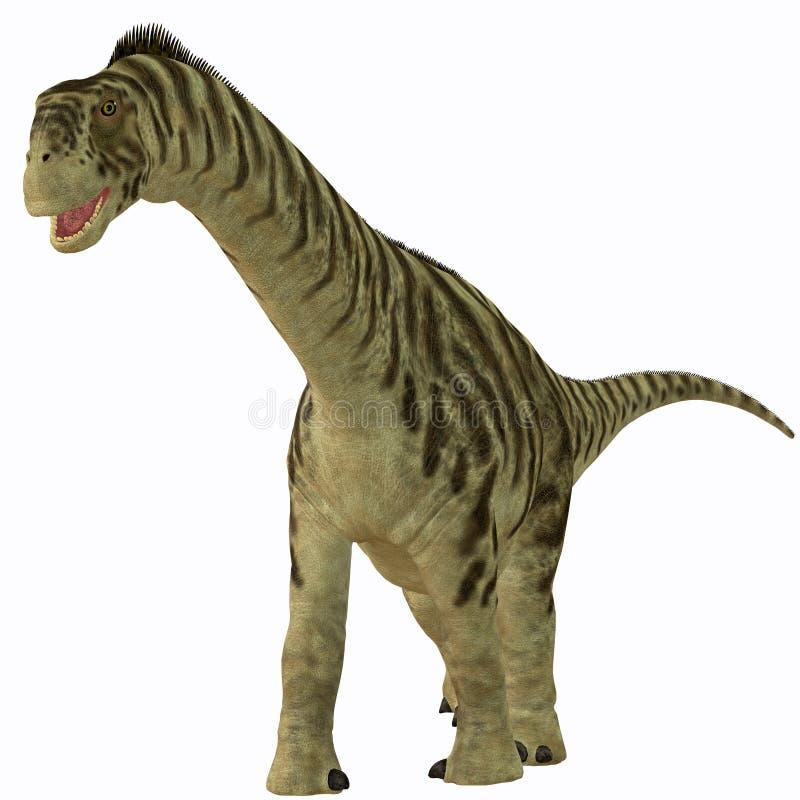 Camarasaurus nieletni na bielu royalty ilustracja