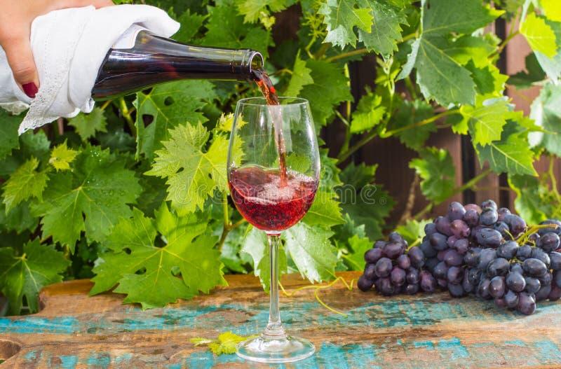 Camarero que vierte un vidrio de vino rojo, terraza al aire libre, tastin del vino imagen de archivo libre de regalías