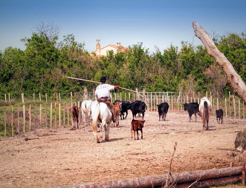 Camargue全国野生生物储备 免版税库存照片