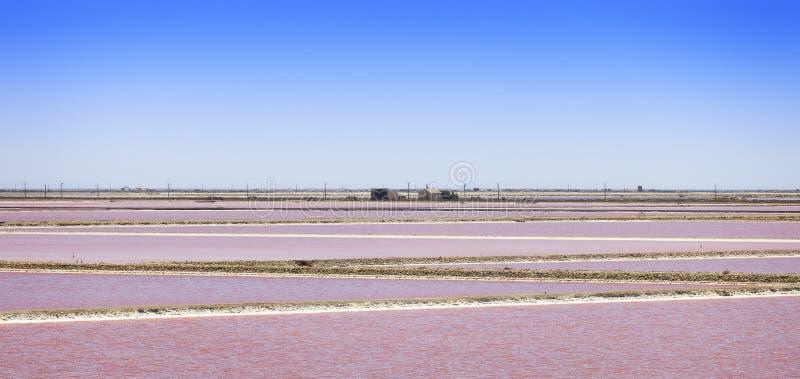 Camargue, Giraud桃红色盐舱内甲板横向 罗讷,普罗旺斯, Fra 图库摄影