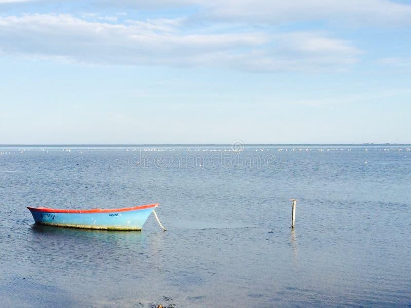 Camargue stock photo
