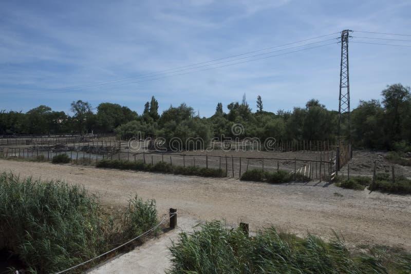 Camargue landskap på Aigues Mortes, Frankrike arkivfoton