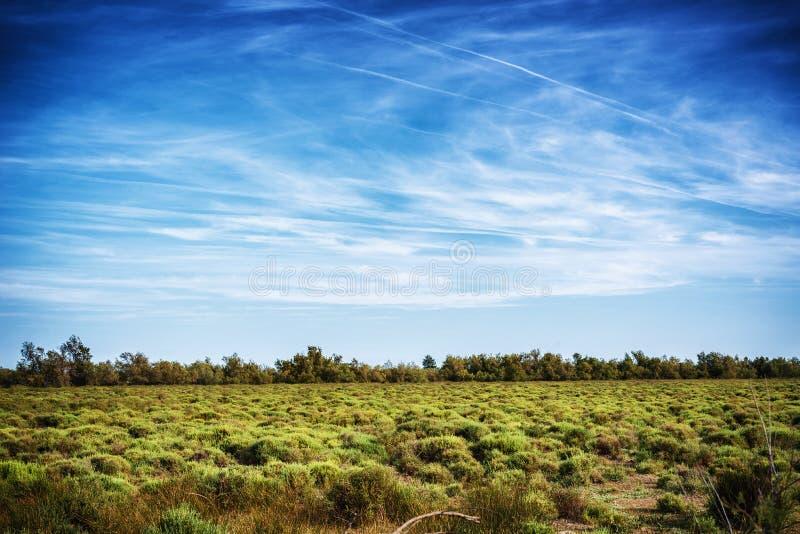 Camarguelandschap stock afbeelding