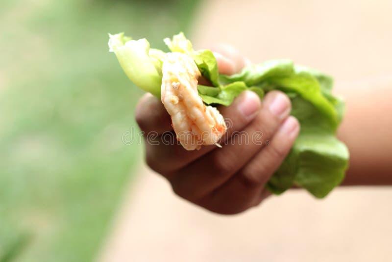 Camarones con las hojas del verde de las verduras a mano fotografía de archivo