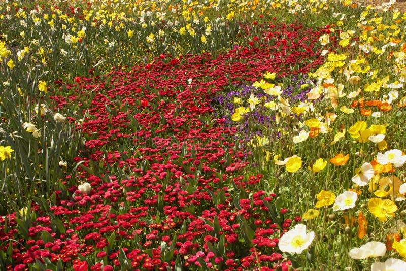 Camas de flor imagenes de archivo